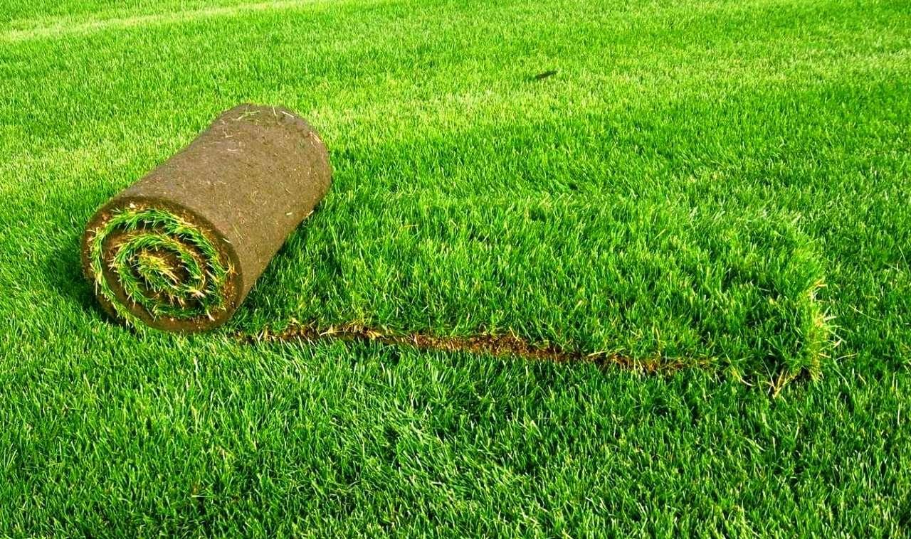 Рулонный газон: как превратить лужайку в сад самостоятельно