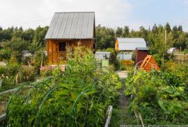 Новые законы о дачах и лесной амнистии